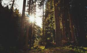 Nos forêts menacées.