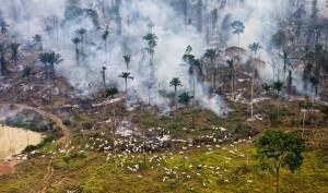 Les grands incendies de forêts sont liées au réchauffement climatique.